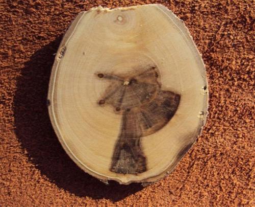 Белый ламинат в интерьере- варианты с фото, в том числе дуб, ясень и другие