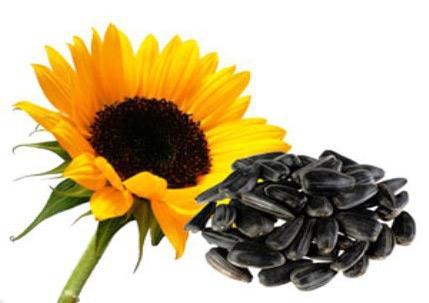 Польза жареных семечек и правильное их приготовление в